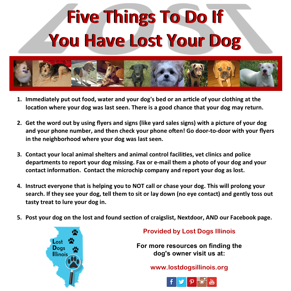 City of Chicago :: Lost Pets and Stray Animals