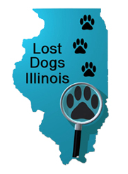 Lost Dog Illinois