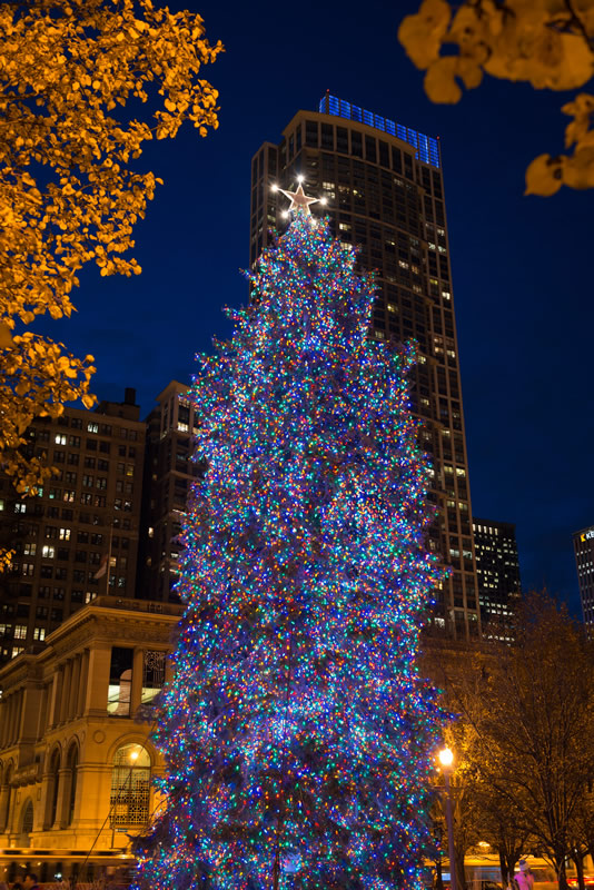 City of Chicago :: City of Chicago Christmas Tree
