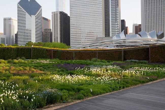 City Of Chicago Lurie Garden In Millennium Park