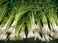 Green onions at the Daley Plaza Farmers Market