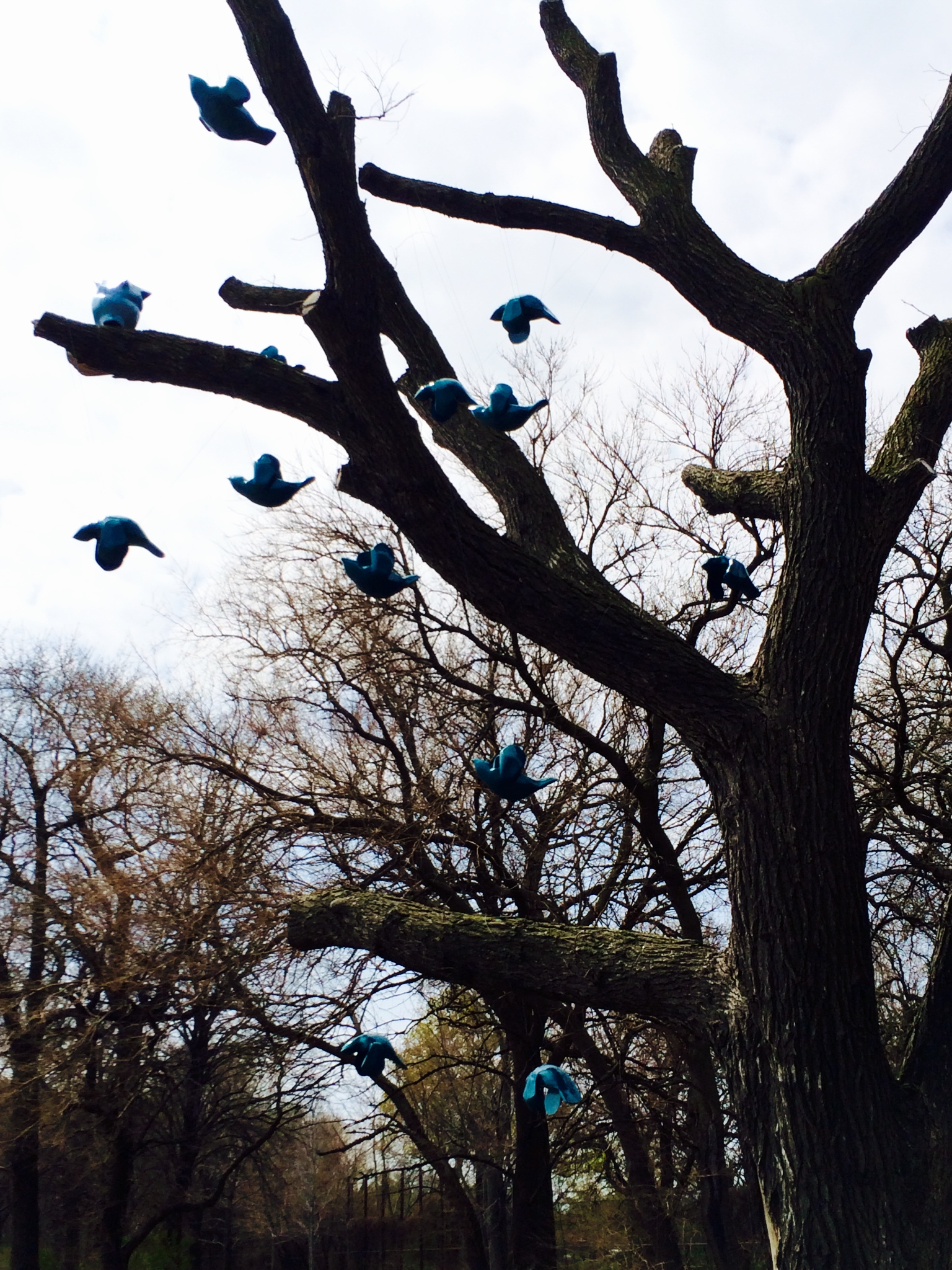 "Flock"" by Margot McMahon, which is currently on display in Jackson Park- (Photo by Carolyn Bendel)"