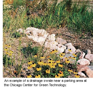 An example of a drainage swale with wild flowers and large stones near a parking area at the Chicago Center for Green Technology.