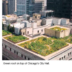 Photo of the green roof on top of Chicago's City Hall.