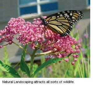 Photo of  a wild flower with a Monarch butterfly in the summer sunlight.