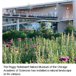 Photo of the Peggy Notebaert Nature Museum of Chicago Academy of Sciences has installed a natural landscape on its campus.